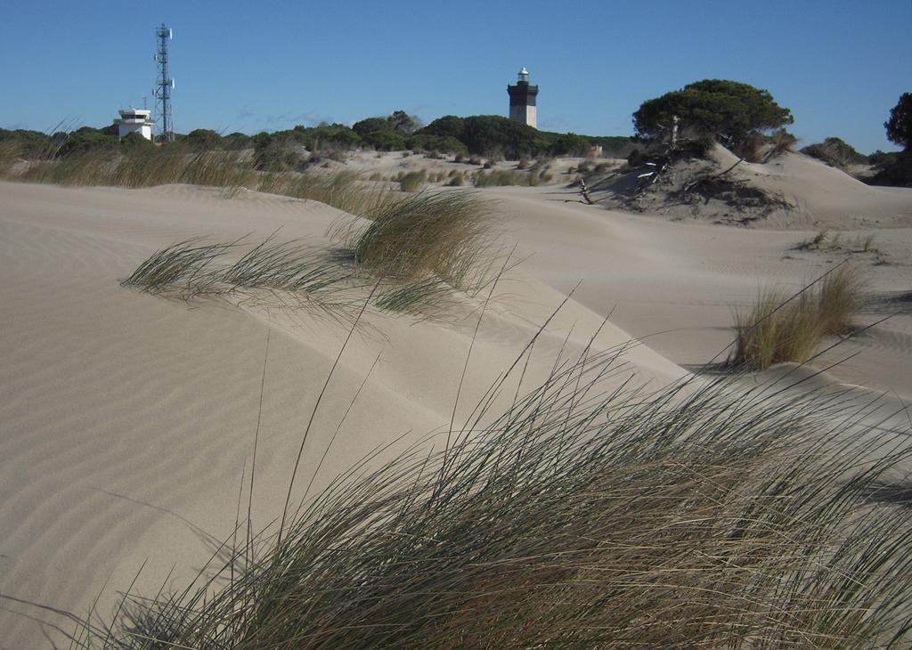 phénomène cougar cape breton