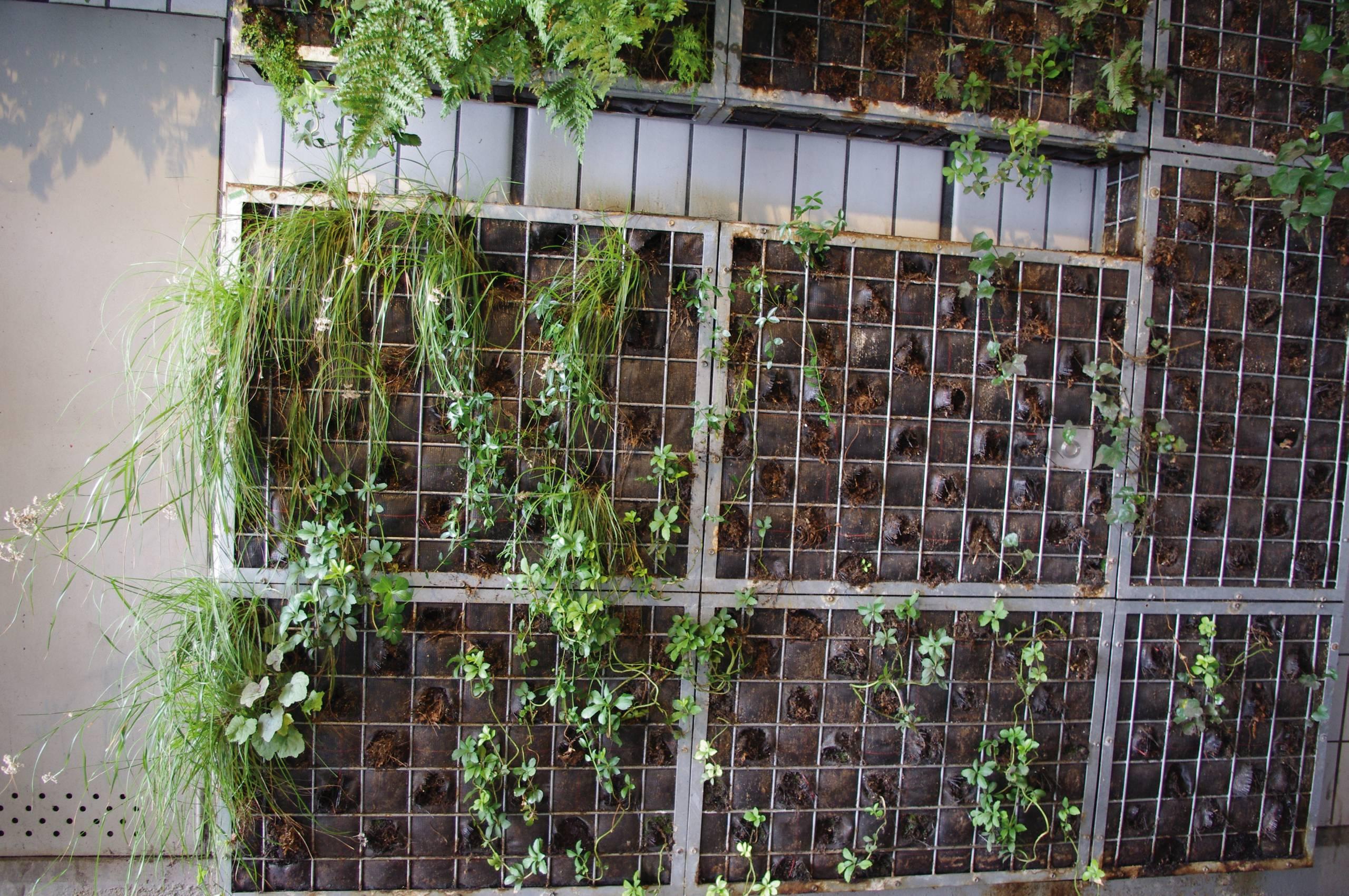 Mur Végétal Extérieur Palette végétalisation verticale. bonnes connaissances exigées…
